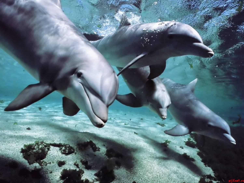 Секс с дельфинами картинки 12 фотография